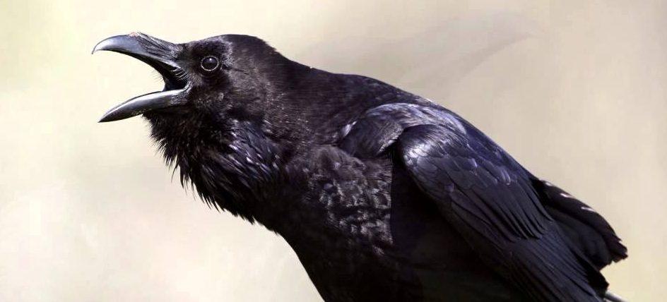 EXPOSING SPIRITUAL BIRDS - REVELATION SPHERE
